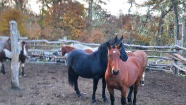 Investigan una denuncia de maltrato a caballos en Tolhuin